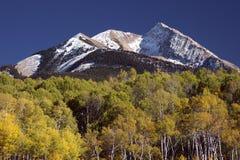 Bosque y montaña de Aspen Fotos de archivo libres de regalías