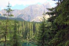 Bosque y montaña de los árboles de pino Fotos de archivo