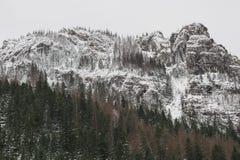 Bosque y montaña del pino cubiertos con nieve contra el cielo gris Fotos de archivo
