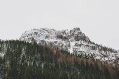 Bosque y montaña del pino en la nieve Fotos de archivo libres de regalías