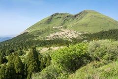 Bosque y montaña verdes Foto de archivo
