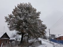 Bosque y nieve Fotografía de archivo