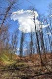 Bosque y nube hermosa Fotos de archivo libres de regalías