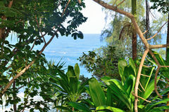 Bosque y océano tropicales Imagenes de archivo