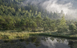 Bosque y orilla del lago brumosos imagenes de archivo