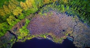 Bosque y pantano Fotografía de archivo libre de regalías
