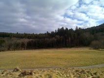Bosque y prado Foto de archivo