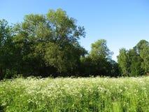 Bosque y prado blanco Foto de archivo libre de regalías