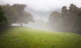Bosque y prado en la niebla Foto de archivo
