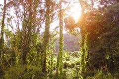 Bosque y puesta del sol; Foto de archivo libre de regalías