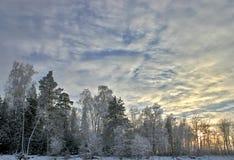 Bosque y puesta del sol del abedul de la nieve Fotografía de archivo