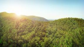 bosque y puesta del sol del pino fotografía de archivo libre de regalías