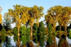 Bosque y río Imagen de archivo libre de regalías