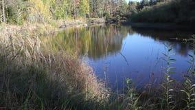 Bosque y río por la tarde almacen de video