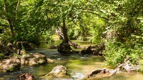 Bosque y río tranquilo de la montaña, vuelo de mariposas almacen de video