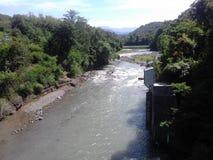 Bosque y río verdes foto de archivo