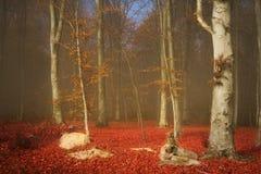 Bosque y rastro de niebla del cuento de hadas a través de las hojas Fotos de archivo libres de regalías