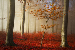Bosque y rastro de niebla del cuento de hadas a través de las hojas Imagenes de archivo
