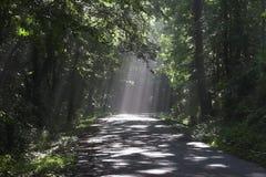 Bosque y rayos de sol Fotografía de archivo