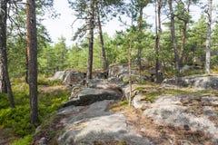 Bosque y rocas del árbol de pino Imagen de archivo libre de regalías