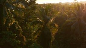 Bosque y selva de la palma en rayos del sol brillante de la puesta del sol selva tropical de las inundaciones de la luz del sol metrajes