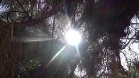 Bosque y sol almacen de metraje de vídeo