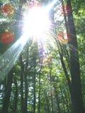 Bosque y sol Imagen de archivo libre de regalías