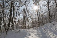Bosque y sol del invierno a través de los troncos de árbol Imágenes de archivo libres de regalías