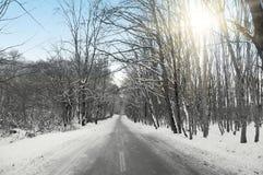 Bosque y sol a través de árboles Fotografía de archivo libre de regalías