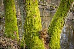 Bosque y una poca cala Fotos de archivo