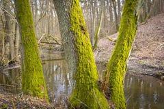 Bosque y una poca cala Imágenes de archivo libres de regalías