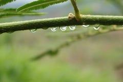 Bosque y waterdrop verdes frescos Foto de archivo libre de regalías