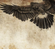 Bosqueje hecho con la tablilla digital del águila americana Foto de archivo libre de regalías