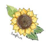 Bosquejo colorido del verano, acuarela, estilo copic del imitaton del marcador Girasol brillante y borroso con las hojas Inscripc ilustración del vector