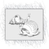 Bosquejo con el caracol Foto de archivo libre de regalías