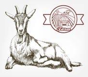 Bosquejo de la cabra dibujado a mano ganado pasto animal stock de ilustración