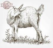 Bosquejo de la cabra dibujado a mano ganado pasto animal ilustración del vector
