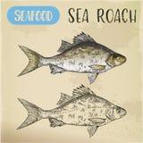 Bosquejo de la cucaracha o del pizarrero común del mar libre illustration