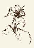 Bosquejo de la flor del lirio en un fondo amarillo Fotos de archivo libres de regalías