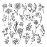 Bosquejo de la flor y de las hierbas del vintage ilustración del vector
