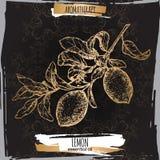 Bosquejo de la rama del limón de Citrus Limon aka en fondo negro elegante del cordón stock de ilustración