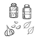 Bosquejo de la sal, de la pimienta, del ajo y de la albahaca Imágenes de archivo libres de regalías