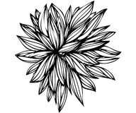Bosquejo de los brotes de flor en un fondo blanco Fotografía de archivo