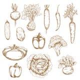 Bosquejo de los iconos orgánicos sanos de las verduras Imagen de archivo libre de regalías