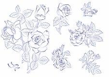 Bosquejo de rosas Imagenes de archivo
