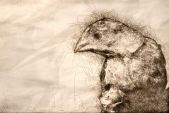 Bosquejo de una casa masculina Finch Profile libre illustration