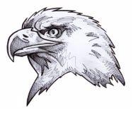 Bosquejo del águila calva Imagenes de archivo