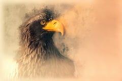 Bosquejo del águila de mar de Stellers Ejemplo de Digitaces Fotos de archivo libres de regalías