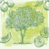Bosquejo del árbol de limón ilustración del vector