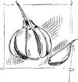 Bosquejo del ajo del dibujo de la mano imágenes de archivo libres de regalías
